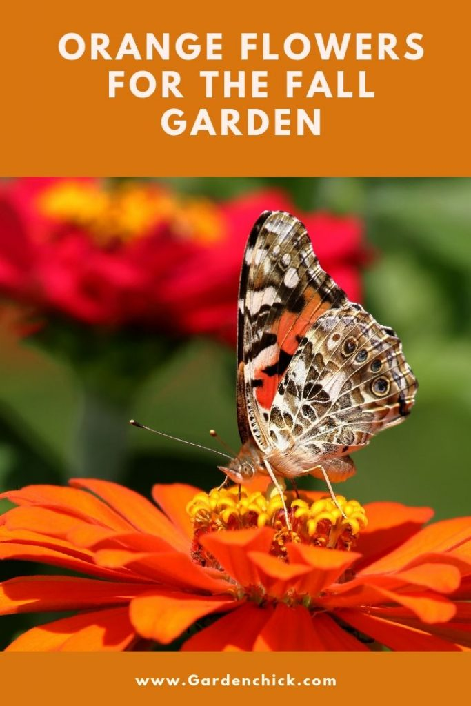 Choose beautiful orange flowers for your fall garden