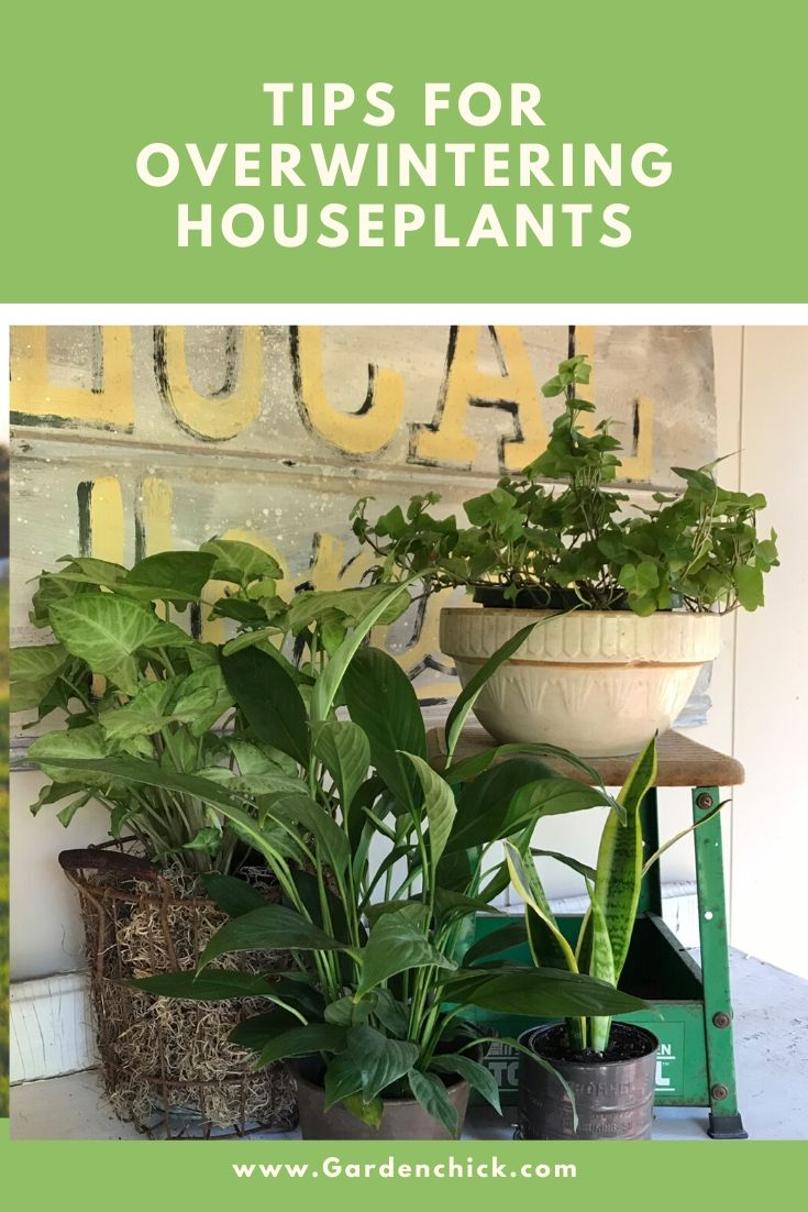 Use these tips to overwinter your houseplants