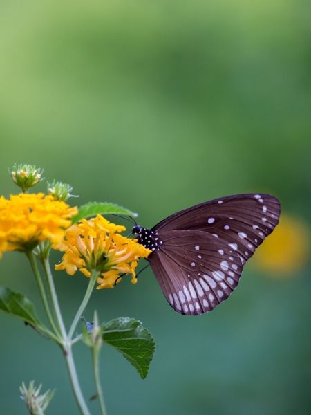 Your butterfly garden will need nectar producing plants for food