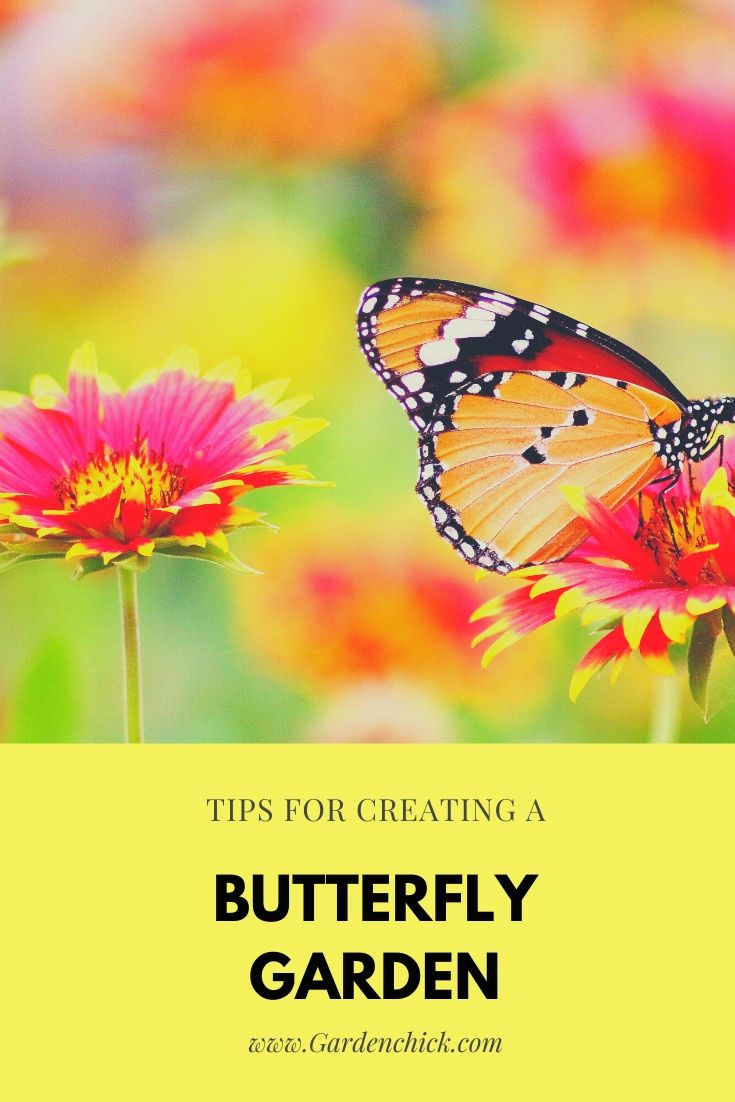 Tips to Create a Backyard Butterfly Garden