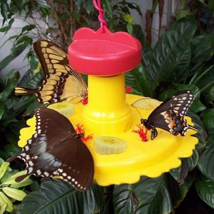 A butterfly feeder is a great addition to your butterfly garden