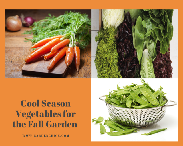 Vegetables for the fall garden