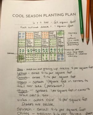 Plan your garden on paper