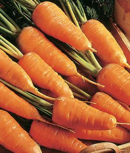 Red Cored Chantenay Carrots